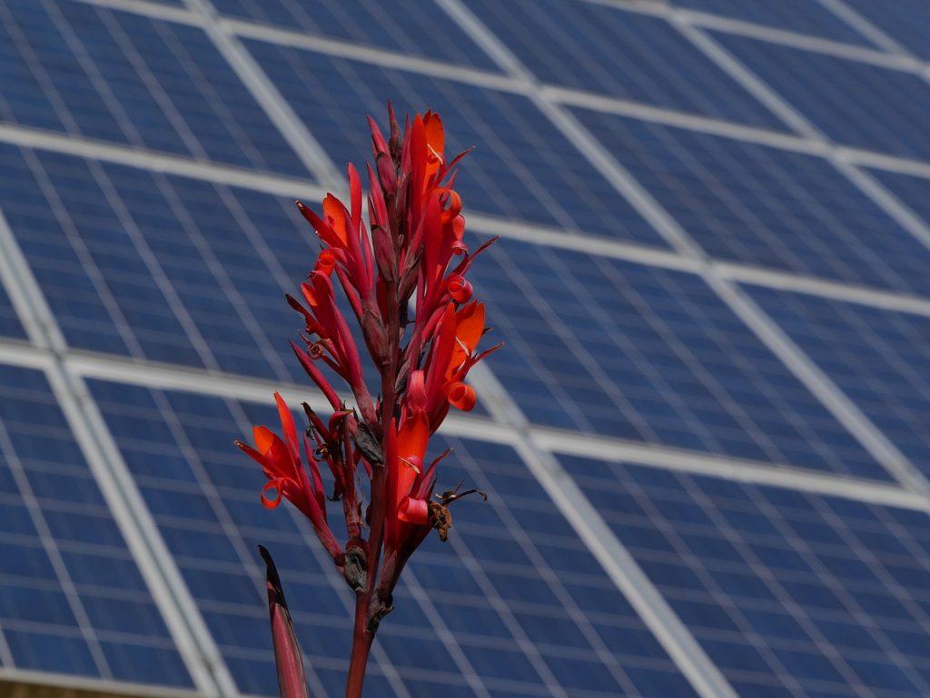 Saulės elektrinėms įsirengti papildomai bus skirta 2,4 mln. eurų